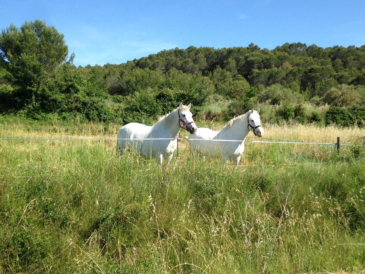 Caveirac Greenway Voie Verte de la Vaunage. Camargue Horses